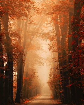 Bomen in mist ok